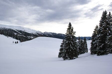 cloudy sky between pine trees and snowy mountains on the Asiago plateau, Vicenza, Veneto, Italy Stockfoto