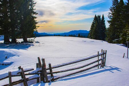 romantic image of palisade covered with snow with the rays of the sun towards sunset near the Vezzene in the Autonomous Province of Trento near the plateau of Asiago Italy.