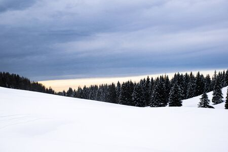 image of the fork of Porta Manazzo in winter with snow and pine trees on the Asiago plateau, Veneto, Italy.