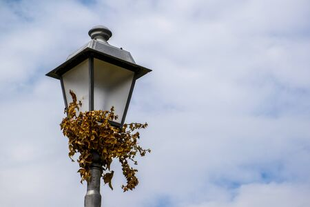 close-up of a metal lamppost with withered ivy with the sky covered with grey clouds in the background near Vicenza, Italy Stock fotó