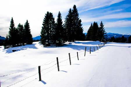 pine trees are silhouetted against the cloudy sky of the snowy plain with snowy paths on the Vezzene in Asiago, Italy