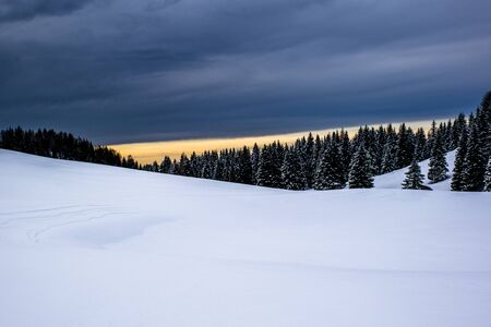 Alpine snowy landscape at sunset with pine trees and clouds on the Asiago plateau in the province of Vicenza, Italy