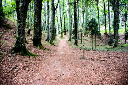 beaten path among the trees of a luxuriant wood under the Sanctuary of San Francesco in La Verna in the Casentino valley in Arezzo Tuscany, Italy Stock fotó