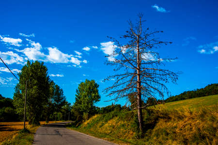 tree by the roadside among lush agricultural fields in Tuscany, Italy