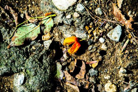 Alchechengi berry found in autumn on the trails of Castegnero, Vicenza, Veneto, Italy