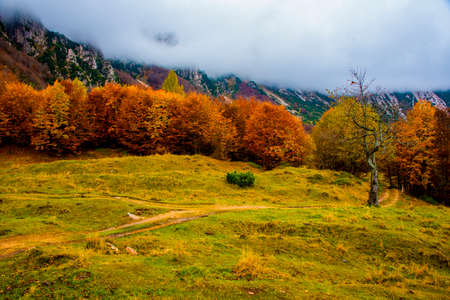 autumn foliage in the path of the big trees in the Venetian pre-Alps, on a sunny day with white clouds and rocky peaks in Recoaro, Vicenza, Italy