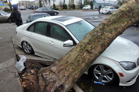 BROOKLYN, NY - OCTOBER 29: Tree felt down to the ground in the Sheapsheadbay neighborhood due to flooding from Hurricane Sandy in Brooklyn, New York, U.S., on Tuesday, October 30, 2012.  