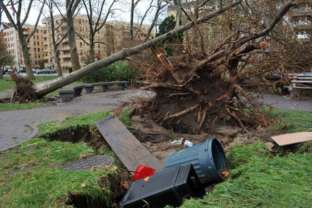 BROOKLYN, NY - OCTOBER 29: Tree felt down to the ground in the Sheapsheadbay neighborhood due to flooding from Hurricane Sandy in Brooklyn, New York, U.S., on Tuesday, October 30, 2012.   Stock Photo - 16816892