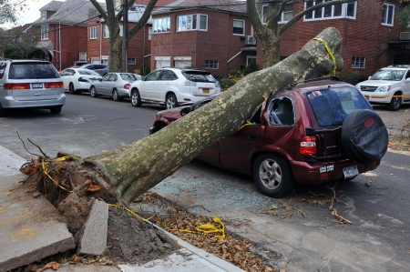 hurricane sandy: BROOKLYN, NY - NOVEMBER 03: Tree felt down to the car in the Sheapsheadbay neighborhood due to strong wind from Hurricane Sandy in Brooklyn, New York, U.S., on Tuesday, November 03, 2012.   Editorial