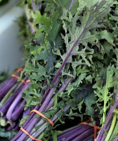 Fresh Organic Red Kale Archivio Fotografico