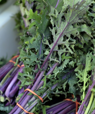 Fresh Organic Red Kale Stock Photo