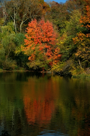 Trees in a park in beautiful fall colors reflected in the still waters of a lake calm
