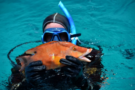 Diver brought to the boat colorful hog fish Stock Photo