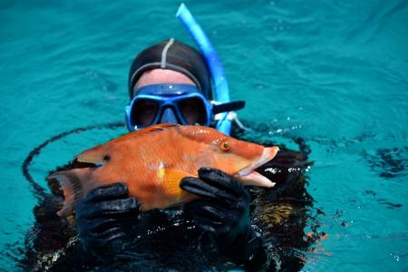Diver brought to the boat colorful hog fish Archivio Fotografico