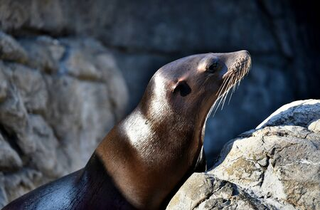 prospect: California Sea Lion at Brooklyn Prospect Park Zoo