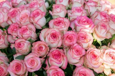 ピンクのバラの大きな花束。100または1000バラの花