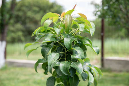 Small apple tree in wild nature. small tree in a green garden
