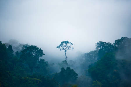 outstanding: The tree that outstanding in the jungle. Stock Photo