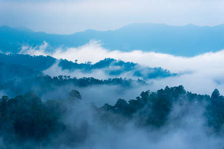 fog forest: Fog step between moutain. Stock Photo