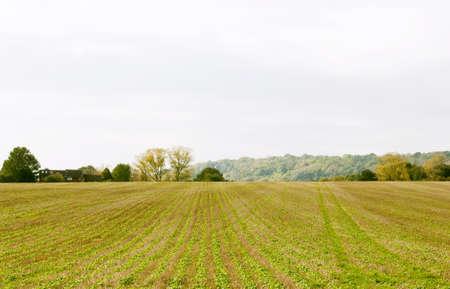 A farmers field Stock Photo - 12835909