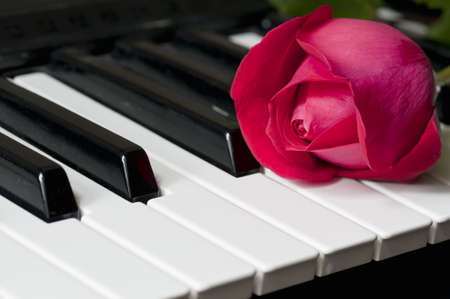 Rose on piano photo