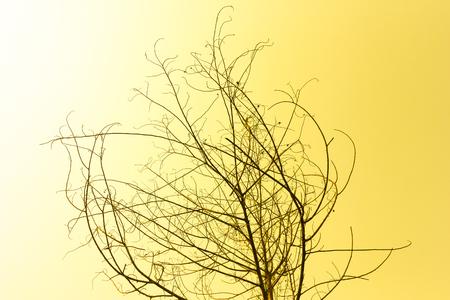 sun burnt: Dried tree on orange sky