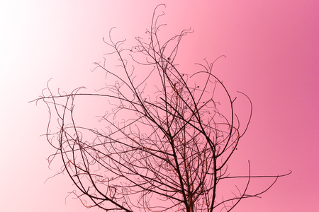 Dried tree on pink photo