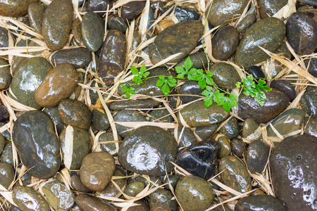 Wet river stones and bamboo leaves on sunshine photo