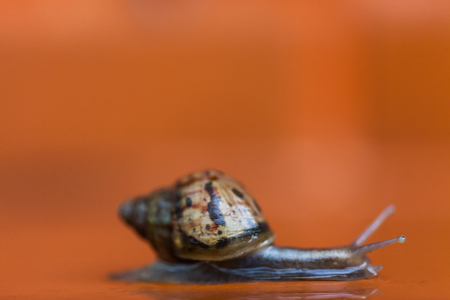 Snail crawling on the floor, Thailand photo