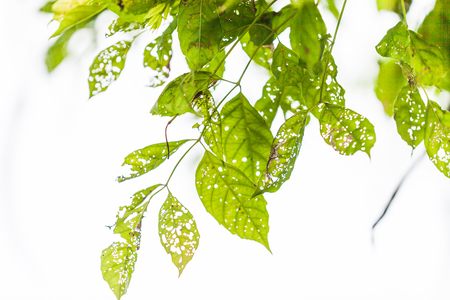 Leaf with holes, eaten by pests, Nature photo