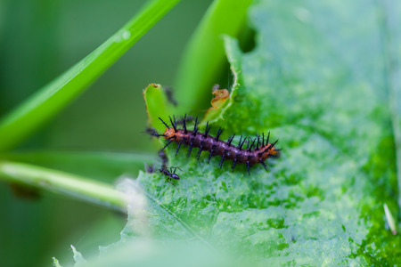 Black worms eating leaves, Nature photo