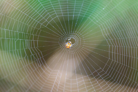 caught: Spider on the web in the forest