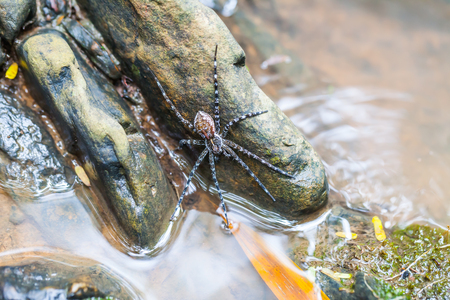 Spider on the rock in the waterfall, Thailand