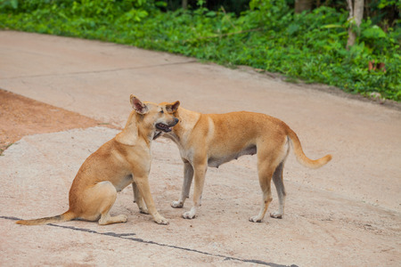 Dog are checking for fleas and ticks, Thailand photo