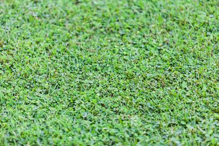 grassy plot: C�sped verde para el fondo, la naturaleza