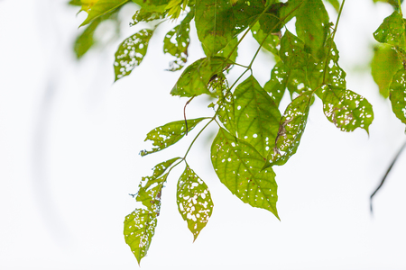 venation: Leaf with holes, eaten by pests, Nature