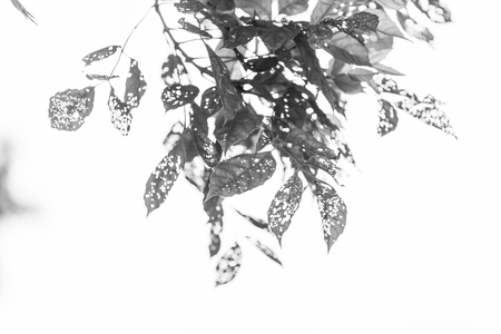 black and white Leaf with holes, eaten by pests, Nature photo