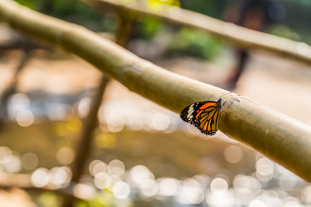 Butterfly and bokeh of water photo
