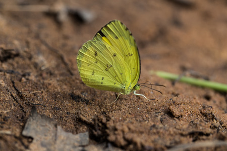 Yellow butterfly on the sand ground photo