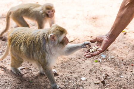monkey taking food from humans hand kind