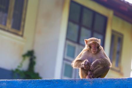 Monkey sleep on the blue and white fence photo