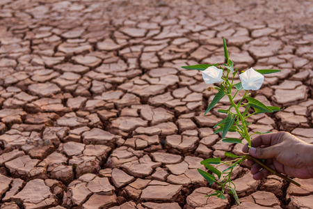 soil pollution: Small white flower plant growing in dry soil with hand background