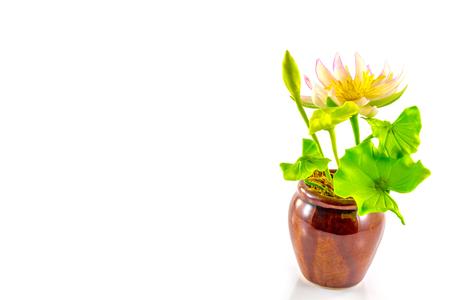 fake flower pink lotus on white background photo