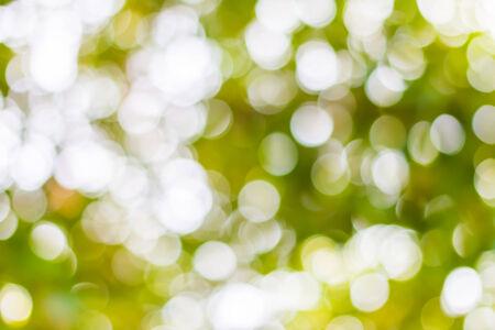 defocus: defocus green bokeh from tree background