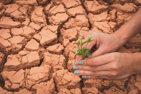 Woman hands holding flower growing on cracked earth background photo