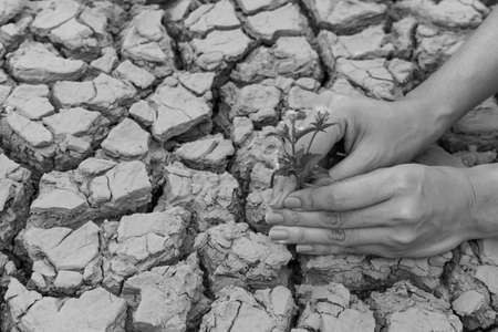 scarcity: Woman hands holding flower growing on cracked earth background