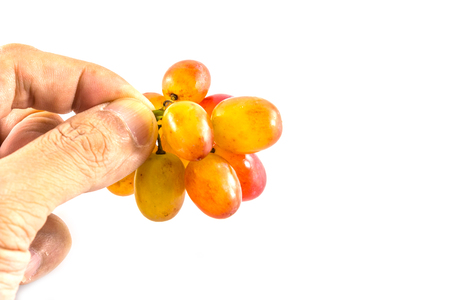 seedless: seedless grapes in hand on a white background