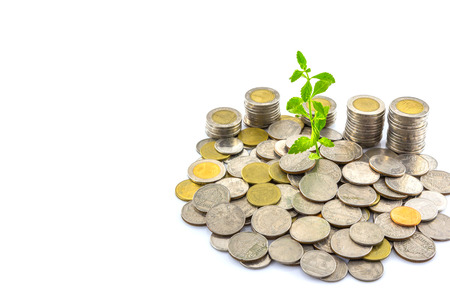 Fresh green tree growing on coins , Money photo