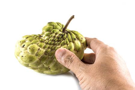sweetsop: Mano tenere Sugar Apple (custard apple, Annona, sweetsop, Cherimoya frutta) su sfondo bianco