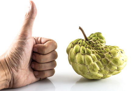 annona: Hand like Sugar Apple ( custard apple, Annona, sweetsop,Cherimoya fruit )  on white background